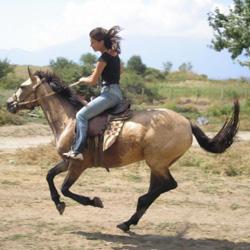 Конные прогулки в Пензе